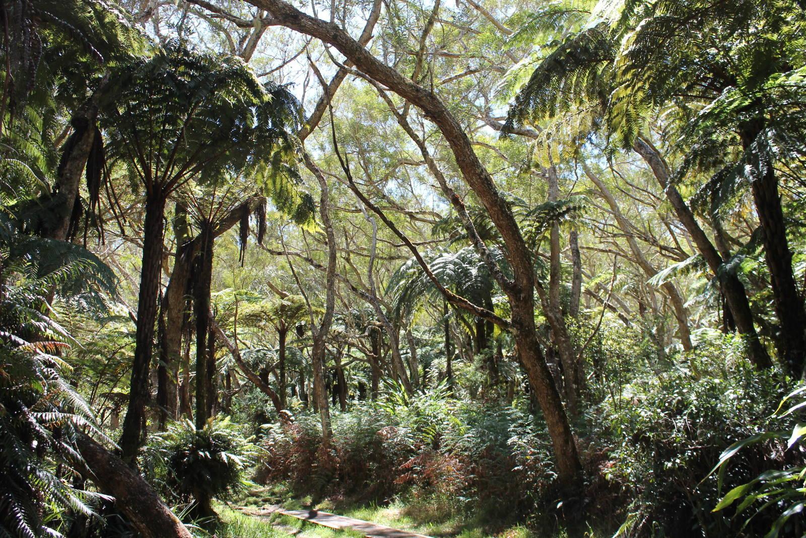 senier trou de fer Réunion présenté par les bons plans de stef