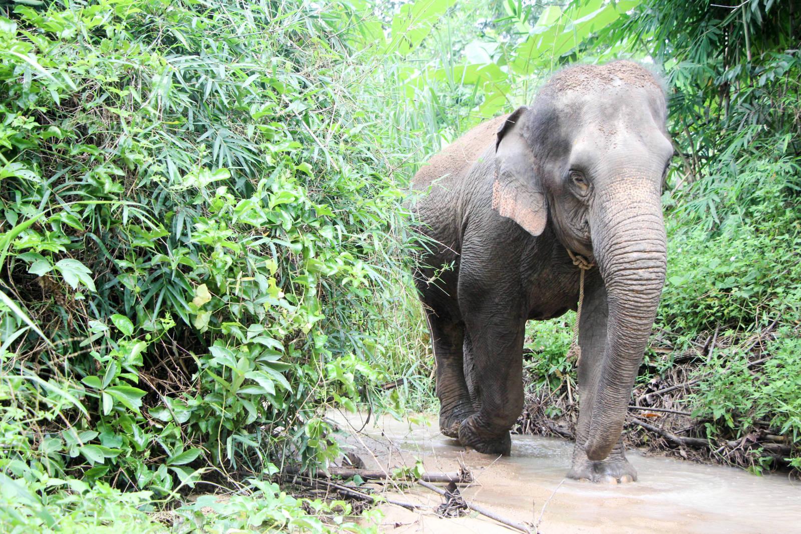 elephant par les bons plans de stef